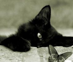 I would love a kitty if it was all black and stayed this tiny