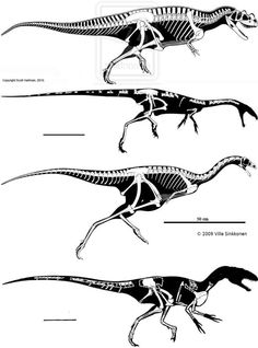 Ceratosaurus Scott Hartman