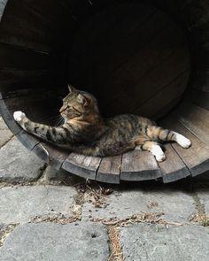 Kitty in a barrel