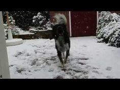 Hoe uw hond beschermen bij een winterwandeling door de sneeuw? *