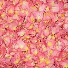 How to Save Rose Petals