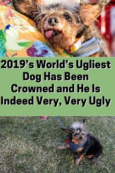World's Ugliest Dog Has Been Crowned and He Is Indeed Very, Very Ugly Beautiful World, Animals Beautiful, Cute Animals, World Ugliest Dog, Very Ugly, Ugly Dogs, Anatole France, Rare Birds, Weird Pictures