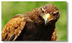 Riegersburg Animals, Photos, Landscape Photography, Animais, Animales, Animaux, Animal
