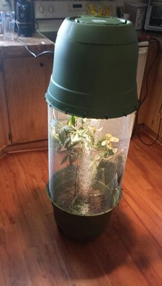 diy Chameleon cage 2 flower pots hardware wire and zip ties and a  plant light  for heat!!