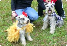 diy-dog-halloween-costumes
