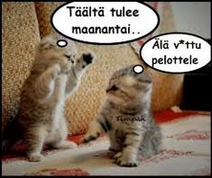 Kuvahaun tulos haulle hauskat kuvat Like Animals, Animals And Pets, Funny Animals, Kittens Cutest, Cats And Kittens, Funny Meems, Hate My Job, Animal Humour, Really Funny Memes