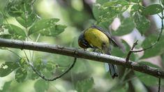 Bird Feeders, Outdoor Decor, Animals, Birds Photos, Animales, Animaux, Animal Memes, Animal, Animais