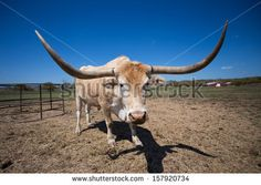 Texas Stock Photos, Images, & Pictures | Shutterstock