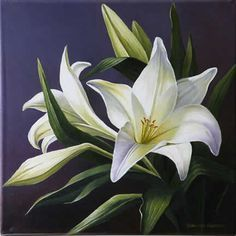 White lilies, original floral still life oil painting by Varvara Harmon. Original art is sold, but prints are available. Watercolor Flowers, Watercolor Paintings, Original Paintings, White Lilies, Day Lilies, Big Flowers, Beautiful Flowers, Lily Painting, Arte Floral