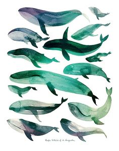 I love this! :: Pacific Whales of An Imagination Watercolor