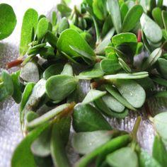 Γλιστρίδα η θεραπευτική! Προσφέρει ότι και τα ψάρια και ακόμη περισσότερα! Health And Nutrition, Health And Wellness, Health Fitness, Herbal Remedies, Natural Remedies, Trees To Plant, Healthy Tips, Spinach, Herbalism