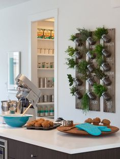 plantes aromatiques accrochés au mur et îlot de cuisine design