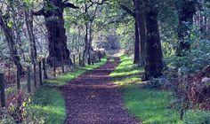 Sherwood Forest, Nottinghamshire, England
