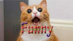 Clever Funny cats opening doors completion 2016, Best funny cats videos,...