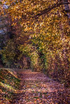 Autumn Alley by ChristianThür Photography on Creative Market Leaves, Autumn, Abstract, Creative, Artwork, Photography, Color, Landscape, Summary