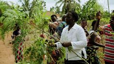 Latest documentary about moringa in Togo, West Africa - United Nations news.