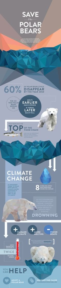 An infographic series featuring different endangered species and the cold hard facts that put them on the path to extinction. Student work.
