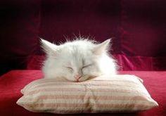 Somnoliento