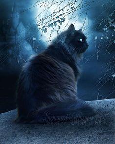 Black cat artBlack cat pictureblack cat printfantasy cat artfull moon
