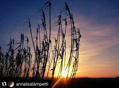 #Repost @annalisalampetti  Good Evening #igers!  #vsco #vscocam #rsa_vsco #trasimenolake .  _____________________________