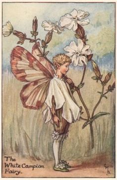 White-Campion-Fairy-by-Cicely-Mary-Barker-Summer-Flower-Fairies-c1935-print
