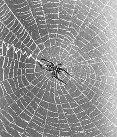 """The Outside Story: """"Web Decorations,"""" by Rachel Marie Sargent. Illustration by Adelaide Tyrol. """"When I was little and tagging along when my dad tended his vegetables, I would sometimes find large black and yellow garden spiders. They were beautiful, and I noticed they had a curious trait: they often added a bright white decorative zigzag to their webs…"""""""