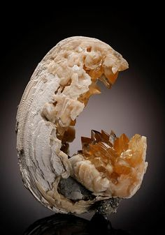 Gemmy light amber intergrown steeply pyramidal crystals of Calcite measuring to around 1.2cm line part of creamy white fossil Bivalve from Florida, USA.