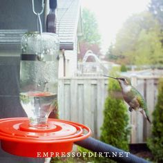 How to make nectar for hummingbirds in the right sugar to water ratio to match how nature does it. Also see which feeders are best for the birds. Make Hummingbird Food, Hummingbird Nectar, Hummingbird Plants, Sugar Water For Hummingbirds, How To Attract Hummingbirds, Landscape Design Small, Modern Garden Design, Little Gardens, Small Gardens