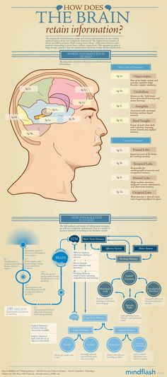 How Does the Brain Retain Information? Infographic Brain and how it learns Exercise your brain bfranklin. Study Test, Coaching, Brain Science, Life Science, Computer Science, Brain Food, Anatomy And Physiology, Brain Anatomy, Med School