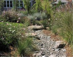 dry creek bed garden - cottage garden without the water needs.
