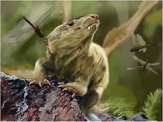 An artistic interpretation of what the newly identified cynodont Bonacynodon schultzi looked like during its lifetime about 235 million years ago during the Triassic. (Credit: Jorge Blanco) Meet Granddad: Weird, Ancient Reptile Gave Rise to Mammals Reptiles, Mammals, Prehistoric Creatures, Zoology, Science And Nature, Weird, Helsinki, Insects, Bristol