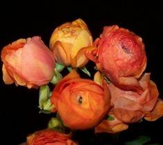 115 Best Orange Flowers Images Orange Blossom Orange Flowers