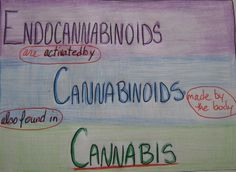 Survey of the Endocannabinoid System | From Most Ancient To Most Advanced Animals