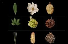 Garden Tech: 10 Essential Flower Apps to ID Plants and Leaves: Gardenista