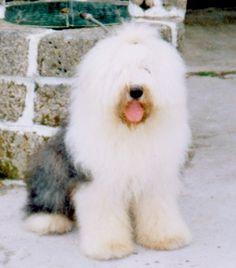 Fotos y vídeos de perros graciosos