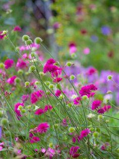 Pinks and purples in the wild garden by Richard Loader