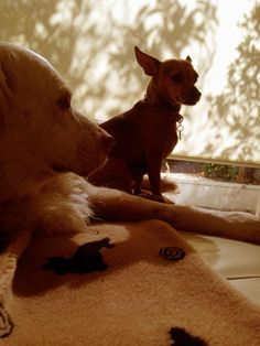 Mac & Daphne