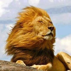 As the wind blows through my hair, I close my eyes and enjoy the moment