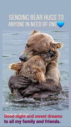 Mundo Animal, My Animal, Animal Hugs, Cute Funny Animals, Cute Baby Animals, Nature Animals, Animals And Pets, Beautiful Creatures, Animals Beautiful