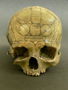 A Human Skull inscribed by a nineteenth-century practitioner of Phrenology. According to this now discredited theory, bumps on the skull betray the volume of the brain areas beneath each one, and thus can be employed to divine a subject's cognitive or moral strengths and weaknesses...