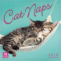 Cat Naps 2014 Wall Calendar: Cats are masters of relaxation, and living proof that naps are the key to contentment. But don't let these sleepy kitties fool Cat Lover Gifts, Cat Gifts, Cat Lovers, Chat Web, Cat Calendar, Sleepy Cat, Maine Coon Cats, Cat Health, Cat Toys