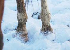 Tips on winter hoof care for horses