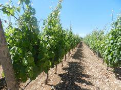 Masseria Altemura e i vini della Cantina Zonin | sudandfood