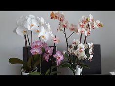 Folosește asta la fiecare udare🤔... să ai mereu Orhideele înflorite😍 - YouTube Glass Vase, Youtube, Home Decor, Plant, Decoration Home, Room Decor, Home Interior Design, Youtubers, Youtube Movies