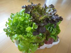 Green Plants, Green Flowers, Growing Herbs, Water Garden, Garden Projects, Lettuce, Cool Kitchens, Vegetables, Cooking