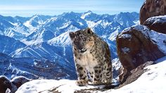 'Planet Earth II': TV Review  This stunning sublime visual accomplishment is must-watch television even for those with jam-packed DVRs and no time.  read more