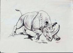 Rinoceronte - Animales | Dibujando.net