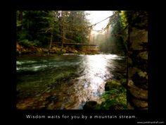 Wisdom waits. Photo: Still Creek, Mt. Hood, Oregon