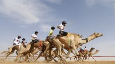 Deep in the heart of the United Arab Emirates, the ancient sport of camel racing is enjoying a resurgence.