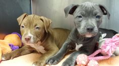 Nine #Puppies Available for Adoption at #heritagehumanesociety